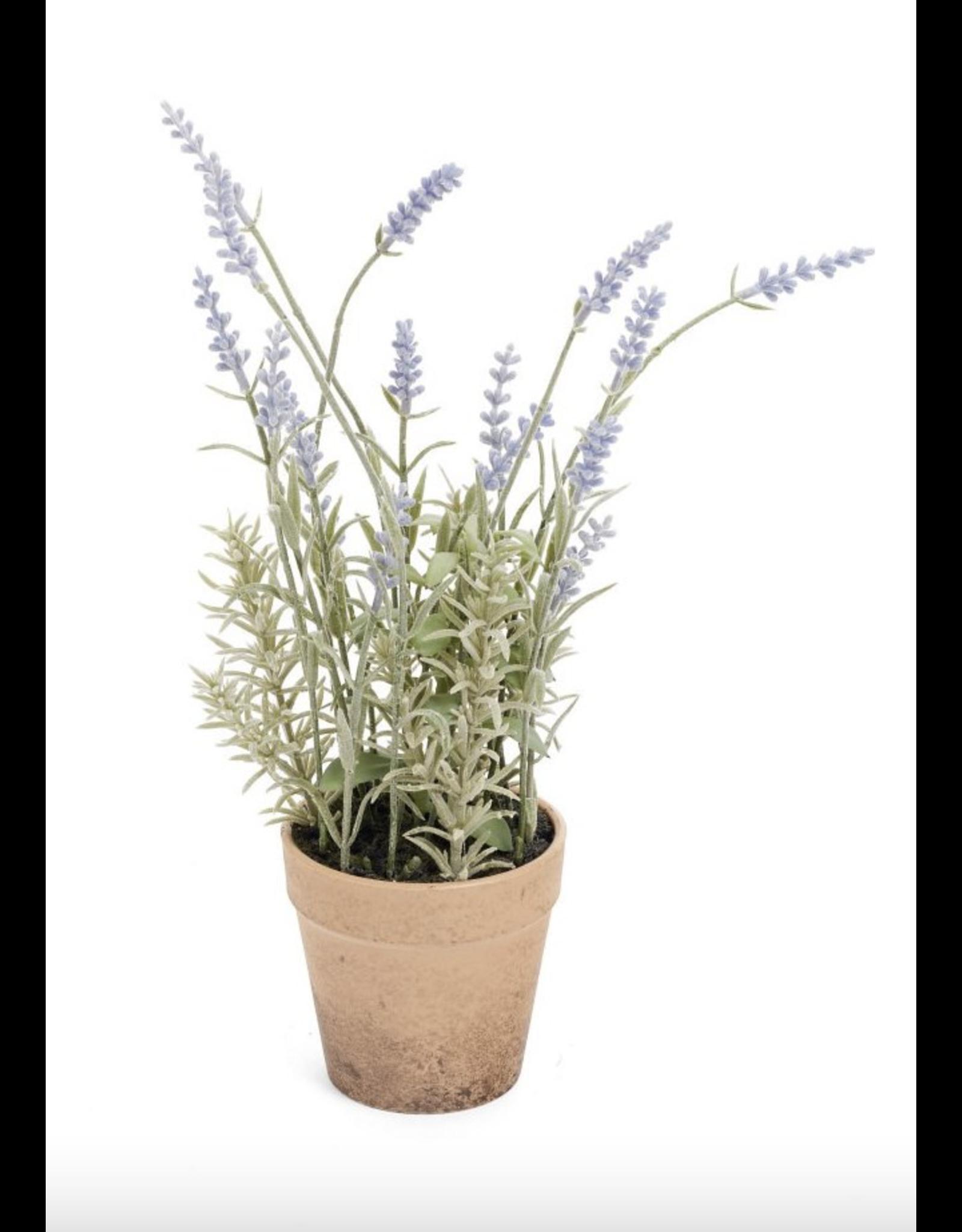 "Potted Lavender 13"""