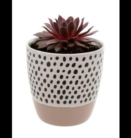 Polka Dot Pot - Desert