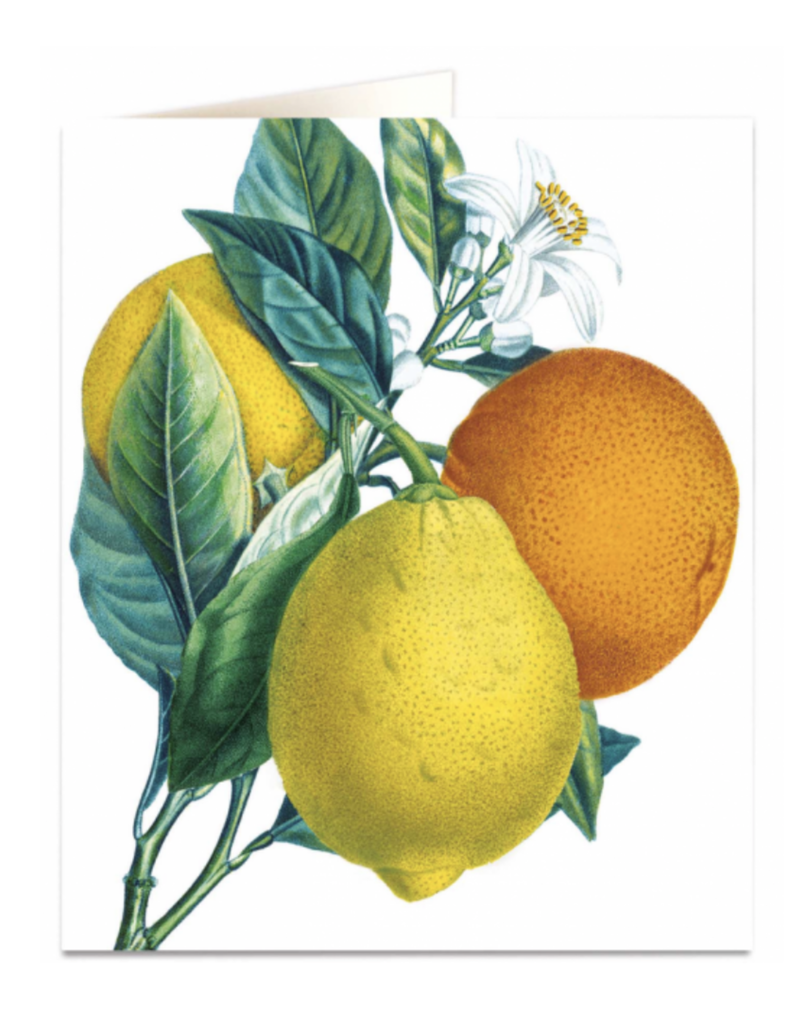 Just Because - Oranges and Lemons