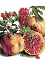 Just Because - Pomegranate