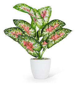 """Large Pink/Green Leaf Plant 16"""""""