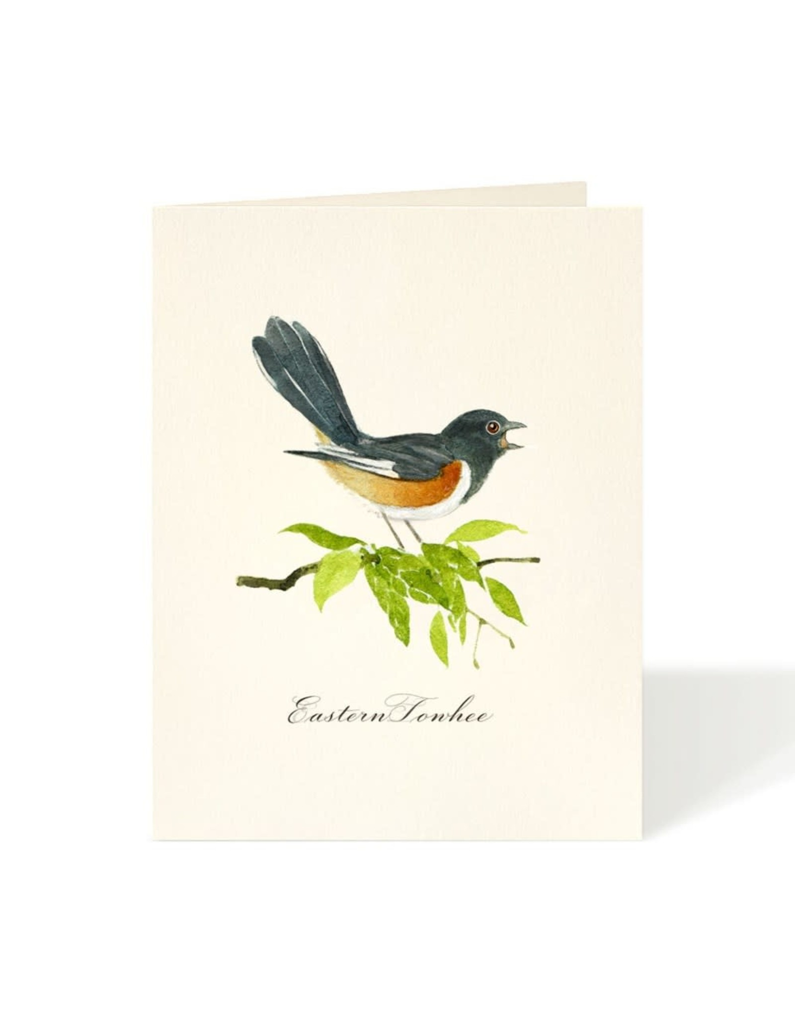 Just Because - Eastern Towhee