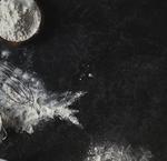 Farines et céréales