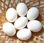 Ferme Avicole Yves Labelle 12 oeufs blancs frais