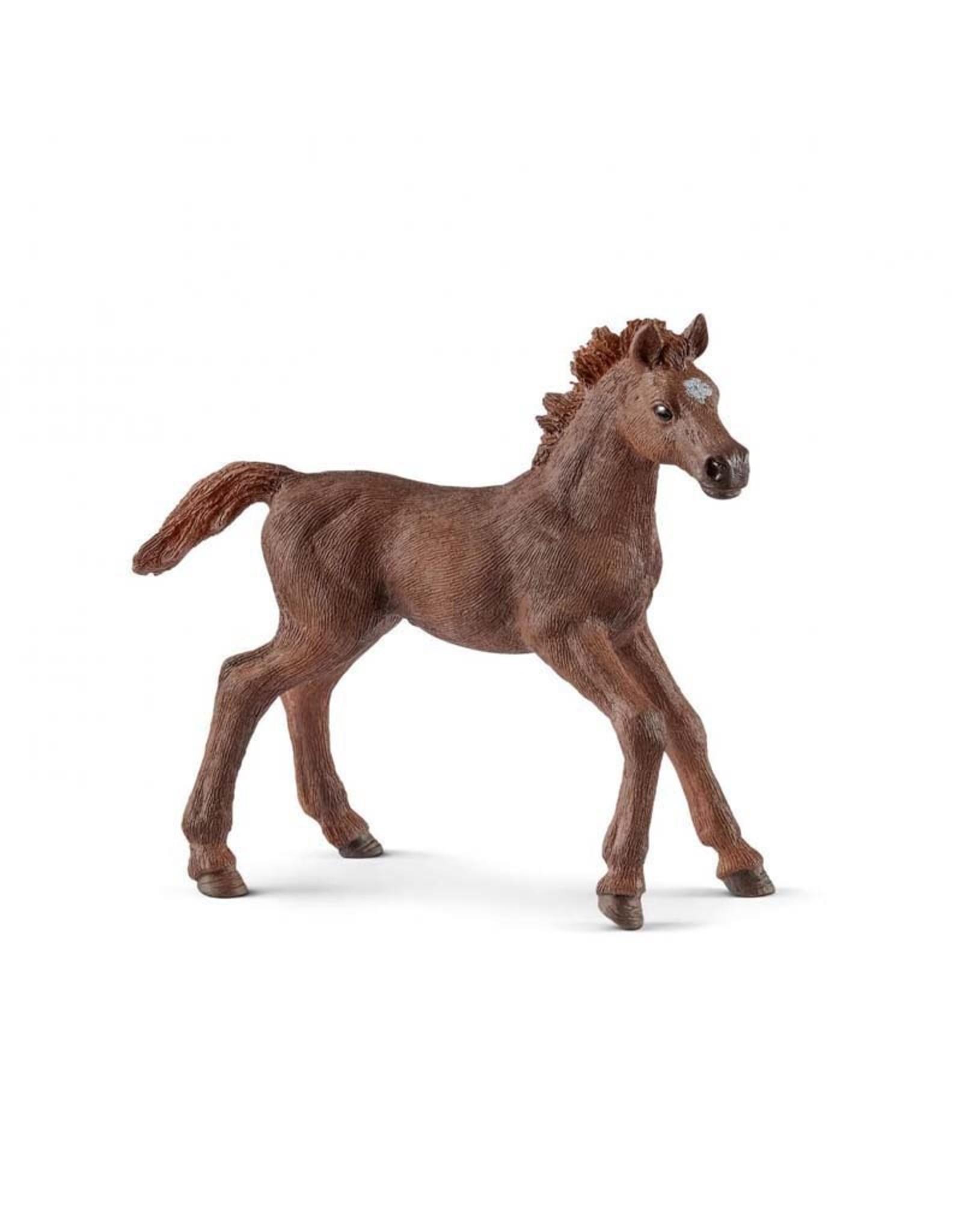 Schleich Schleich English thoroughbred foal