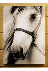 Cadre cheval blanc