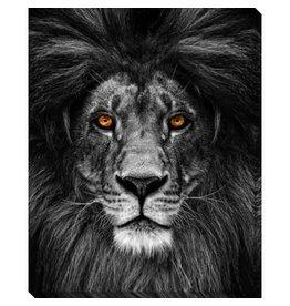 Cadre Lion