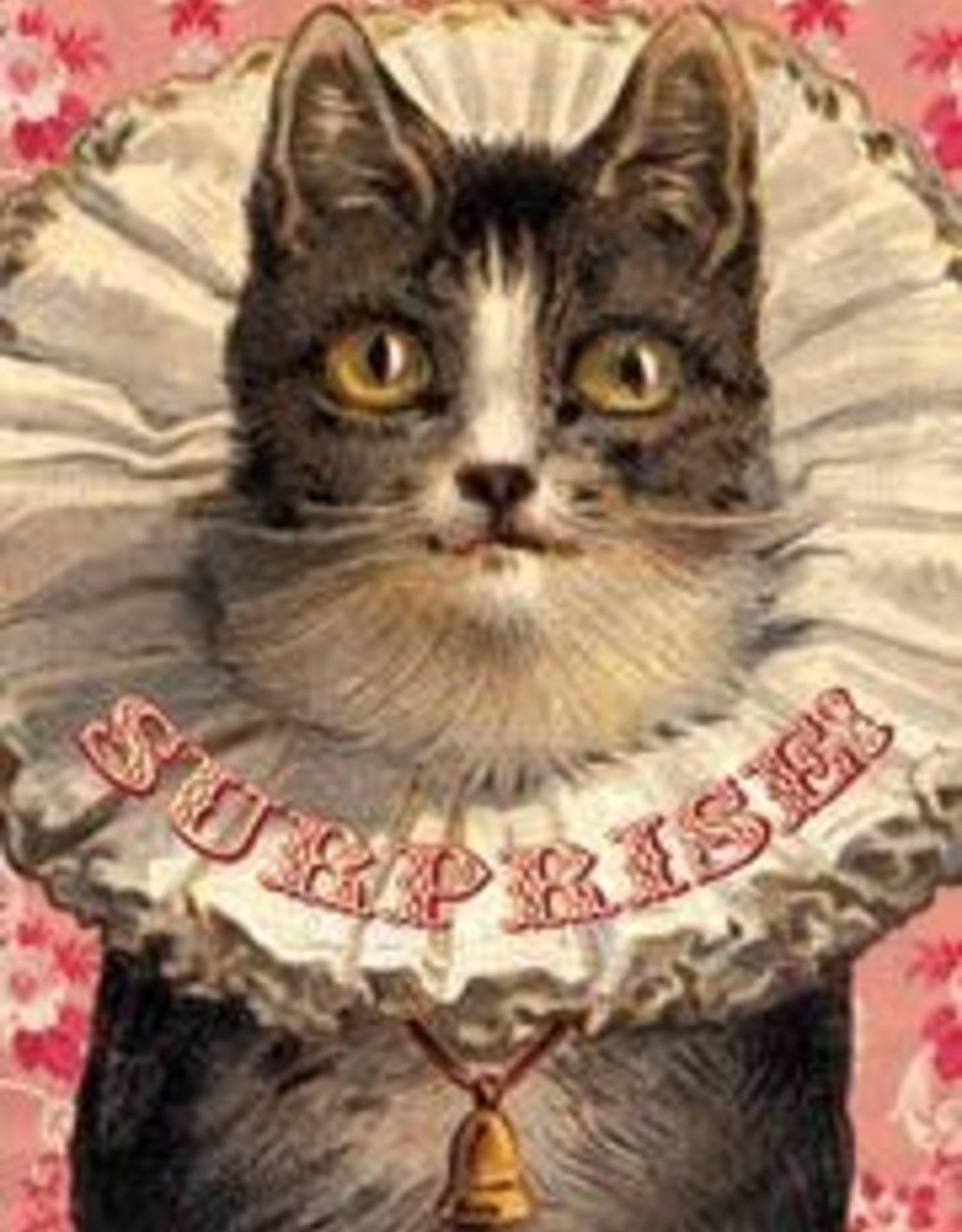 CARD-JUST BECAUSE-SURPRISE CAT