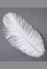 "FEATHER-SINGLE OSTRICH, 9-12"", ASST"
