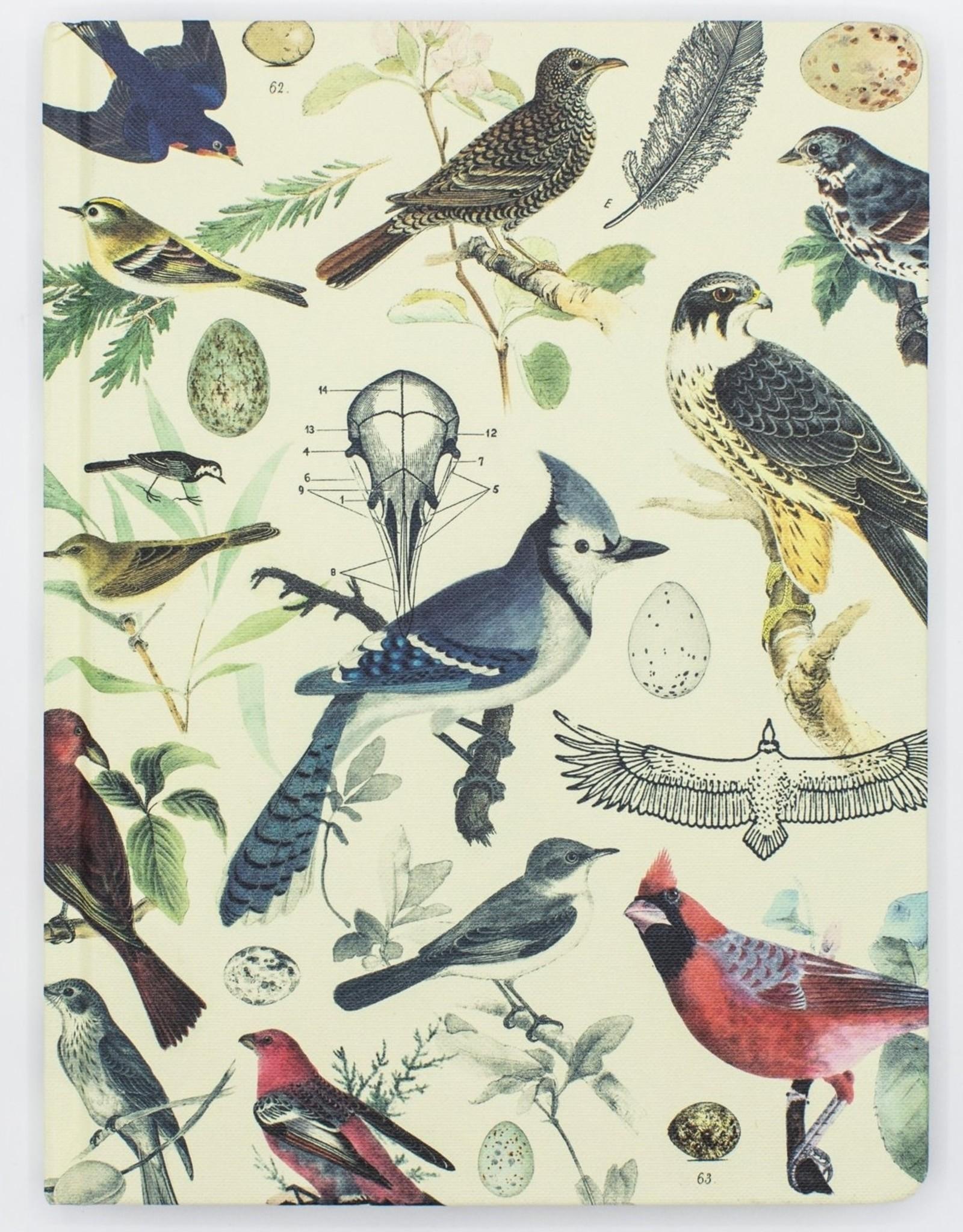 JOURNAL-LINED/GRID-ORNITHOLOGY BIRDS