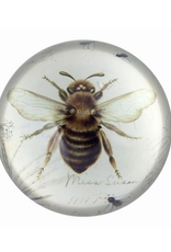 PAPERWEIGHT-GLASS DOME, BEE PRINT