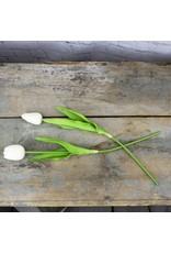 Honey and Me Large Ivory Tulip Stem