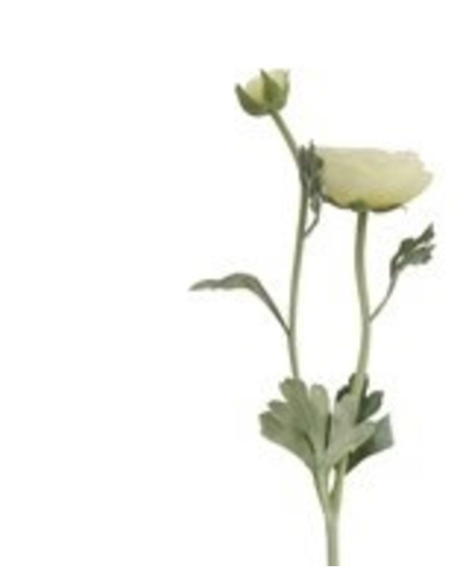 Creative Co-op Ranunculus Stem - yellow