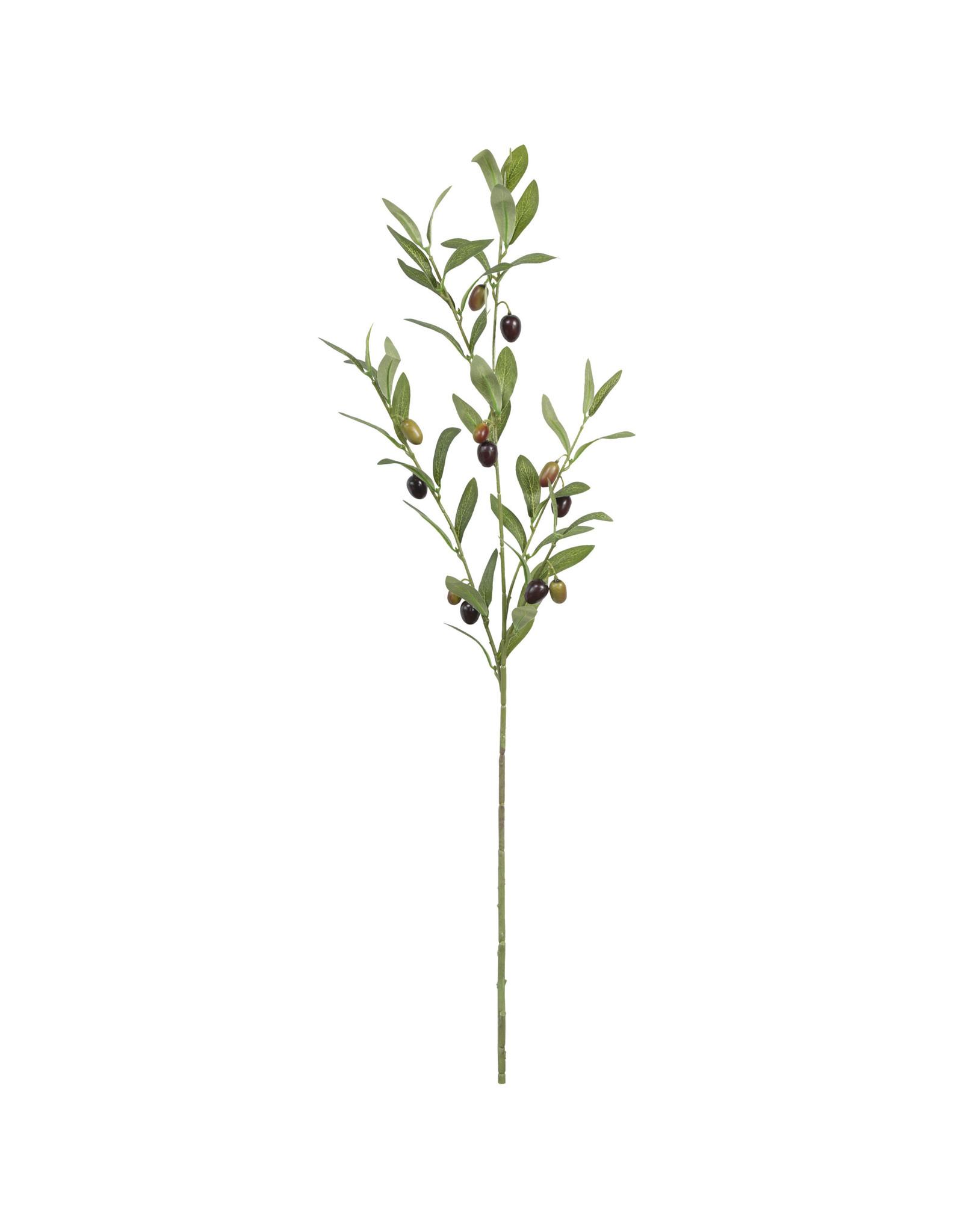 The Florist & The Merchant Olive Branch Stem