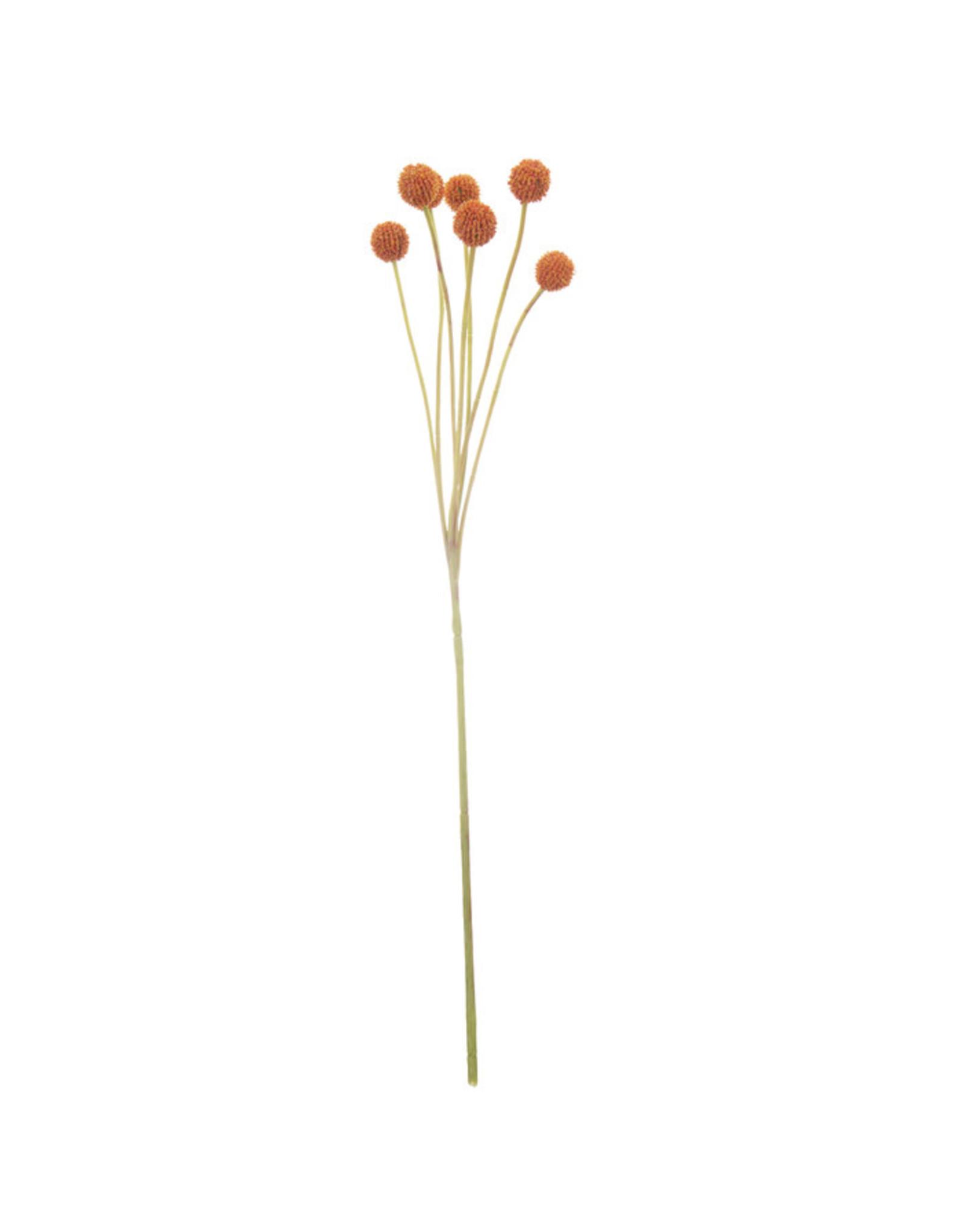 The Florist & The Merchant Billy Button/Ball Stem - orange