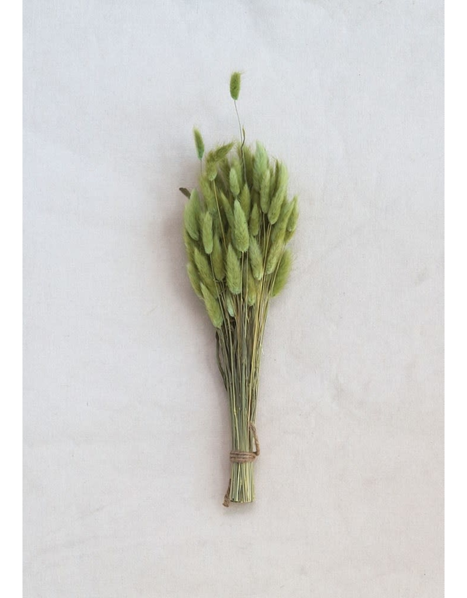 """Creative Co-op 15"""" Dried Bunny Tail Grass Green"""