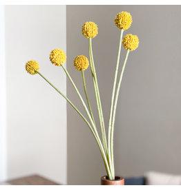 The Florist & The Merchant Yellow Billy Button/Ball Stem