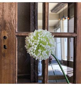 The Florist & The Merchant White Allium Stem