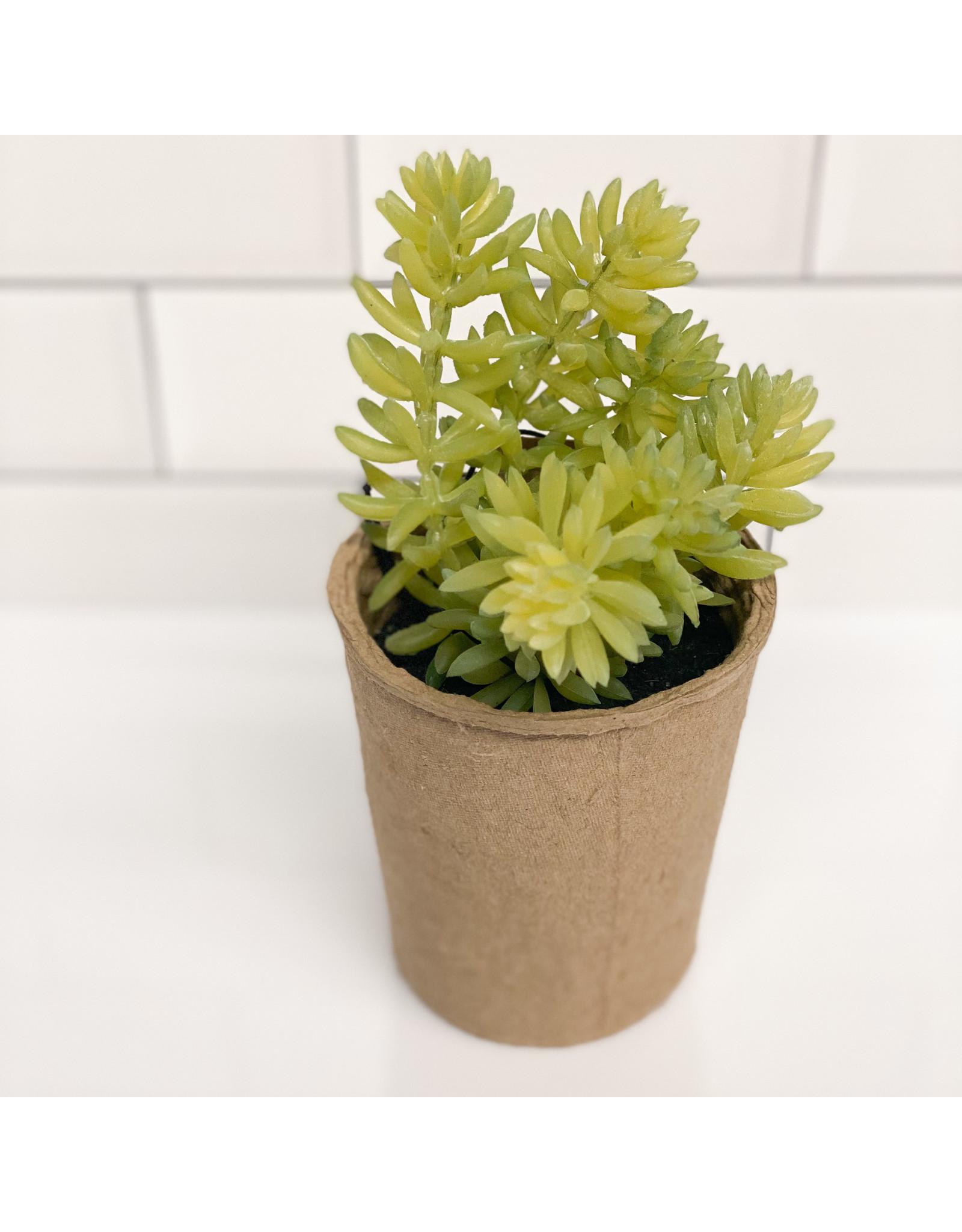 "Creative Co-op 5 1/2"" Faux Succulent in Paper Pot"