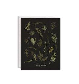 June & December Boxed Note Cards - Endangered Ferns