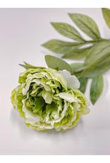 The Florist & The Merchant Peony Stem - Light green