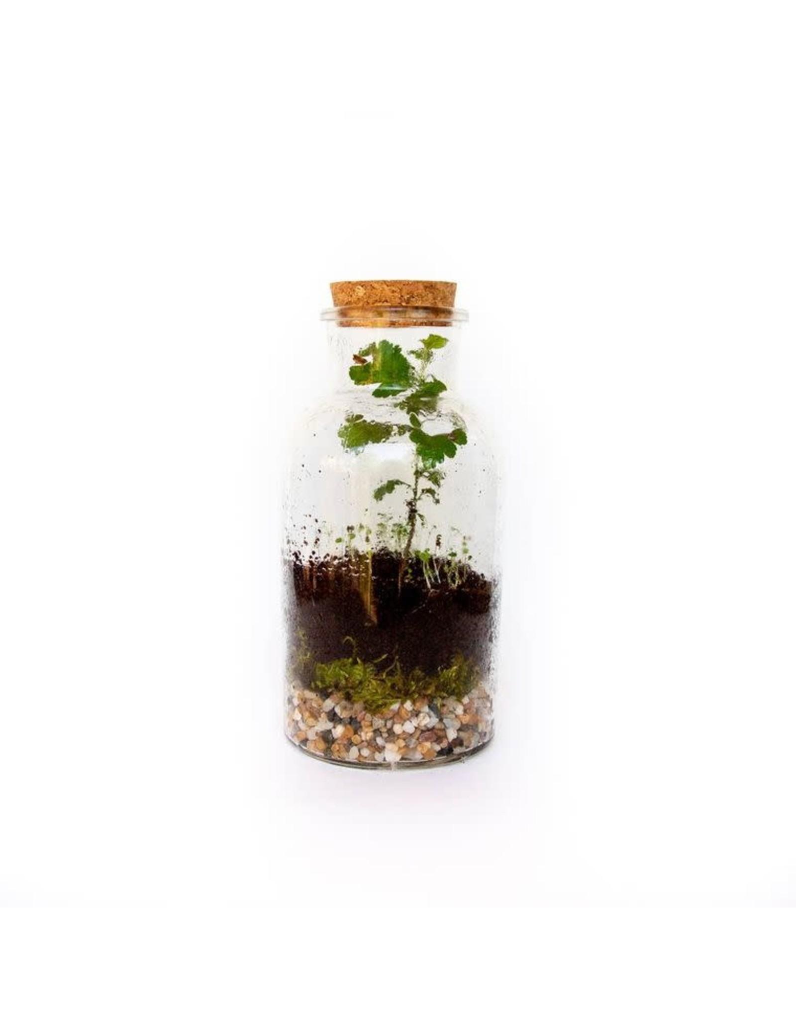 Seattle Seed Co. DIY Terrarium Kit