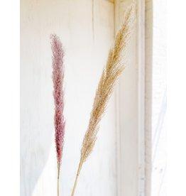 The Florist & The Merchant Pampas Grass