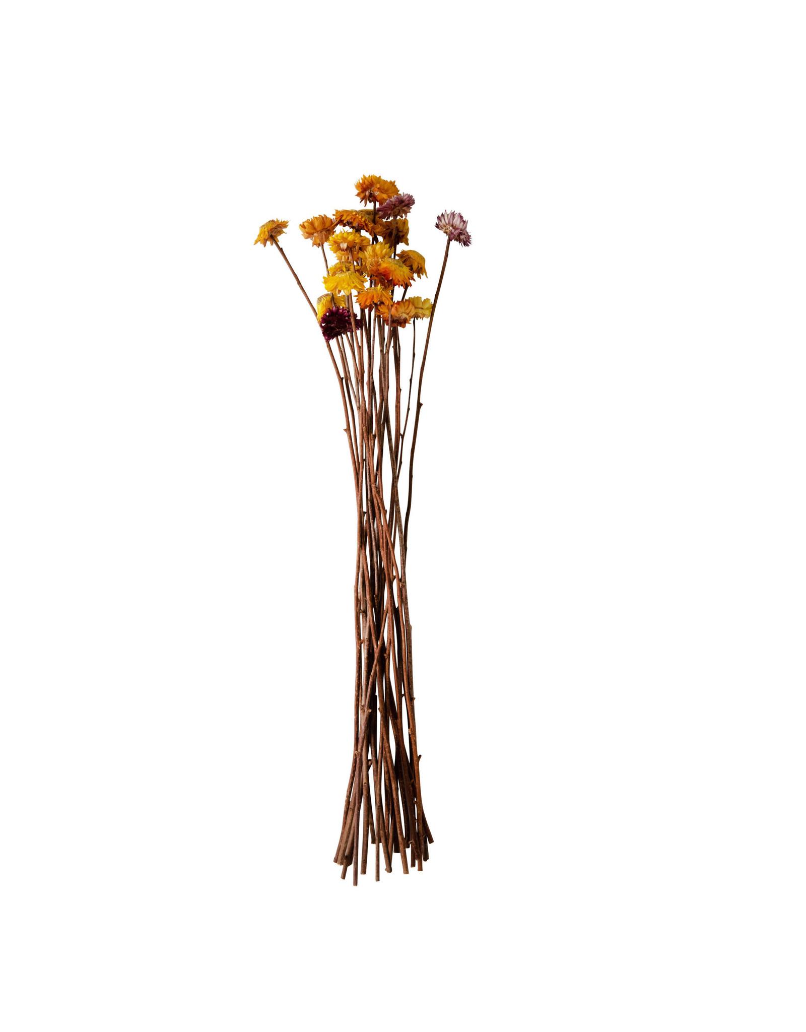 The Florist & The Merchant Dried Helication Flower Bundle, Multicolor