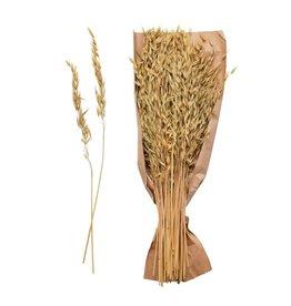The Florist & The Merchant Dried Natural Avana Grass Bundle