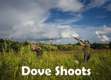 Dove Shoots
