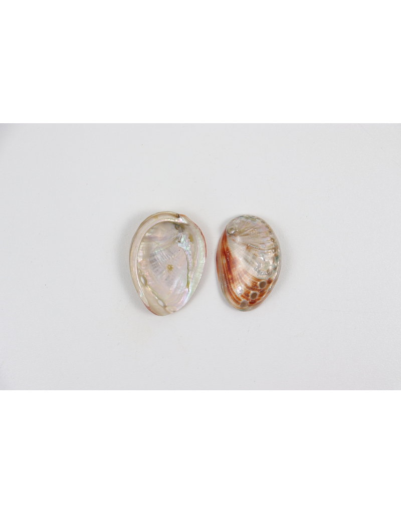 """Natural Red Abalone Shell 3"""""""
