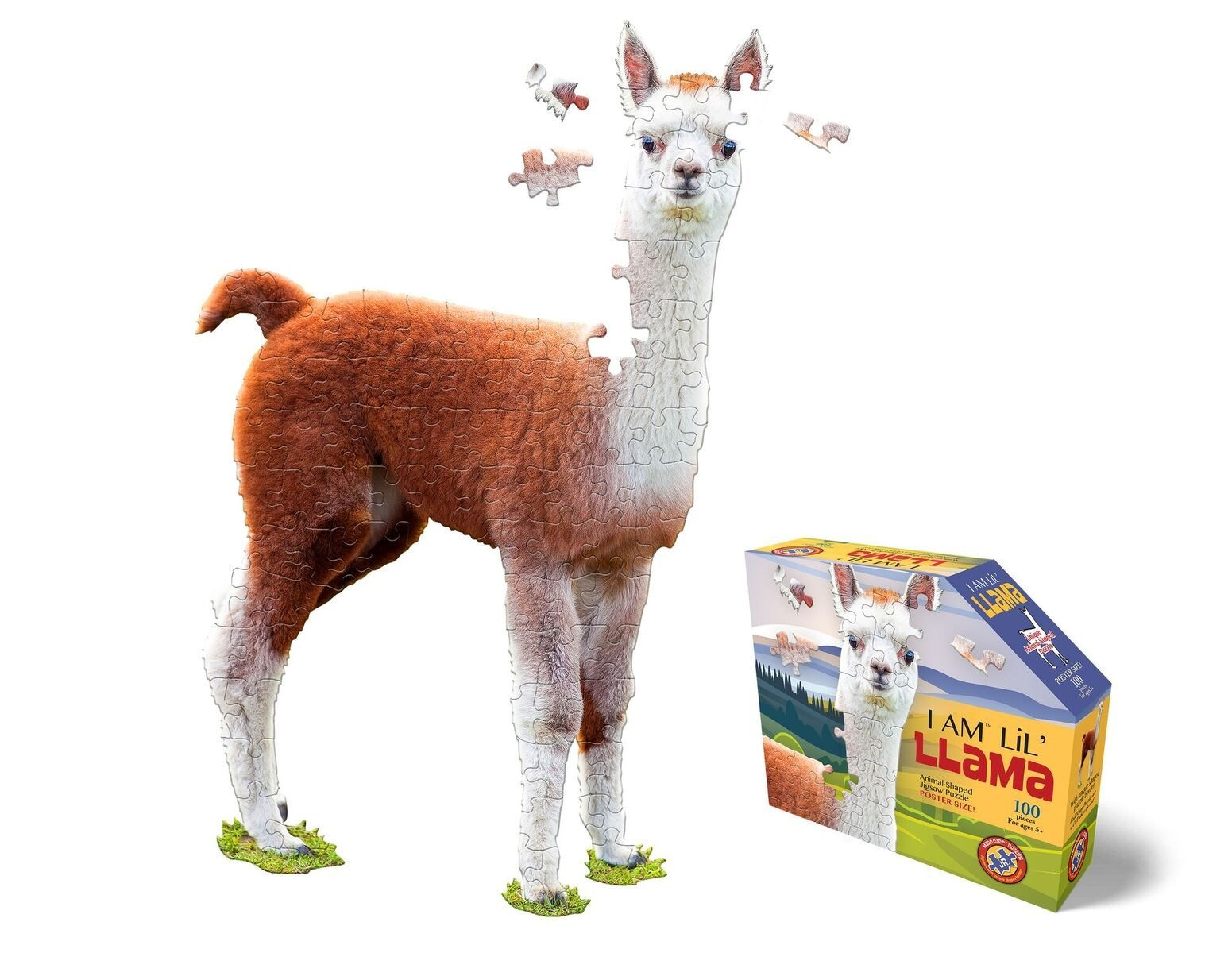 I Am Lil Llama 100 pc
