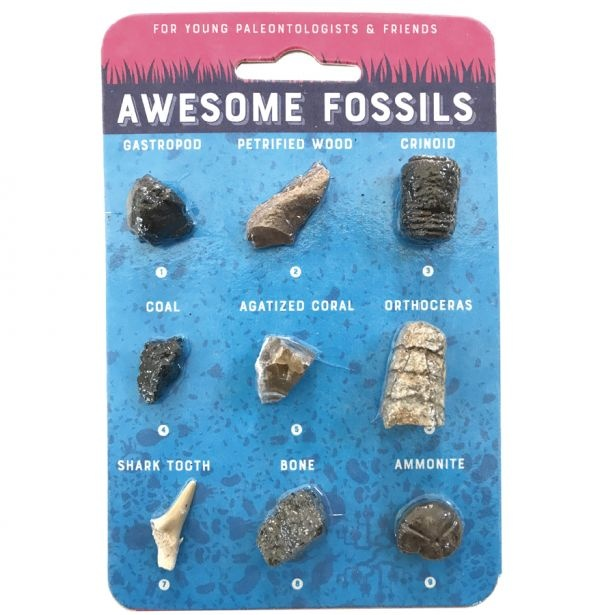 Copernicus Toys Awesome Fossils