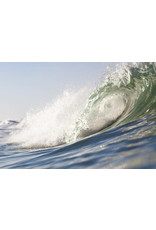 Pink Fin Photography Curve Print