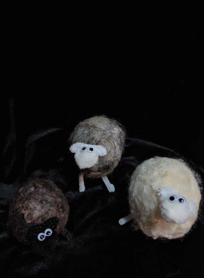 Richert Ranch Mini Sheep
