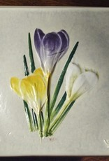 "Wave 4"" Crocus"