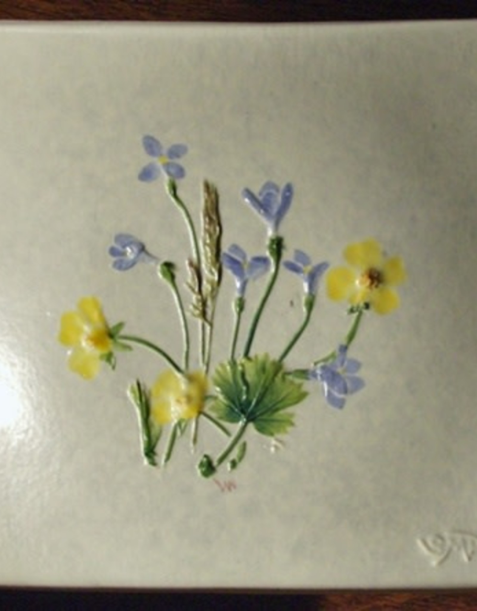 "Wave 4"" Bluets Cinquefoil"