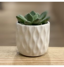 "3"" Succulent in Ceramic"