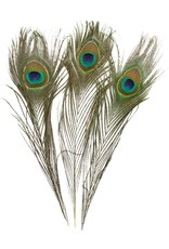 Go Cat Feather Toys GO CAT PEACOCK FEATHER