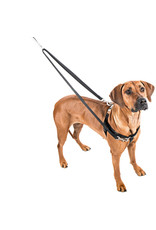 2 Hounds Design 2 HOUNDS DESIGN JELLYBEAN SPICE THE FREEDOM NO-PULL HARNESS + LEASH