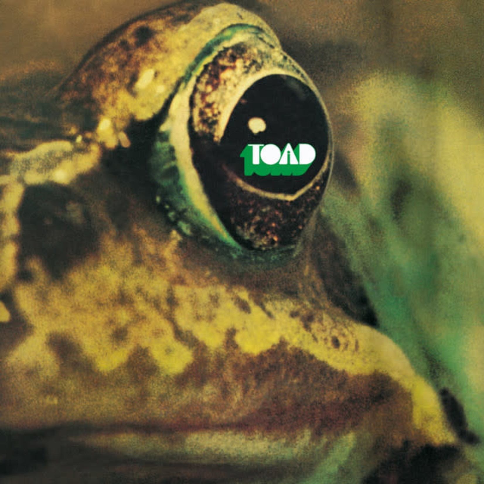 Vinyl Toad - ST
