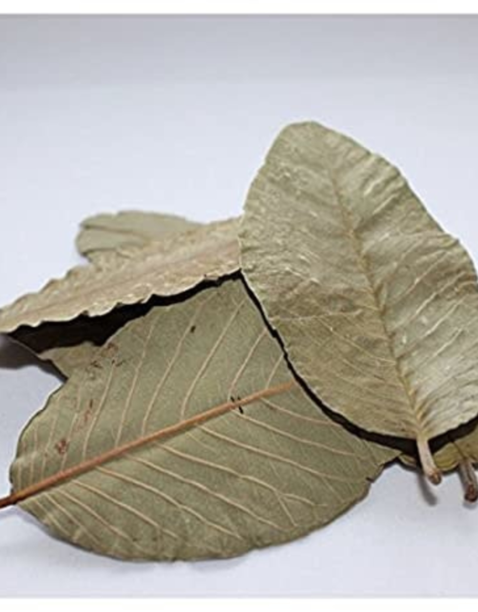NewCal Pet Guava Leaves (10 Pack)