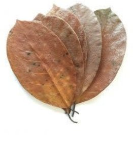 NewCal Pet Jackfruit Leaves