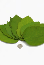 NewCal Pet Mulberry Leaves (10 pack)