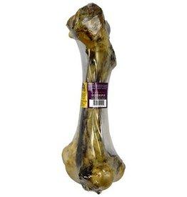 Silver Spur Buffalo Bone Femur Dino