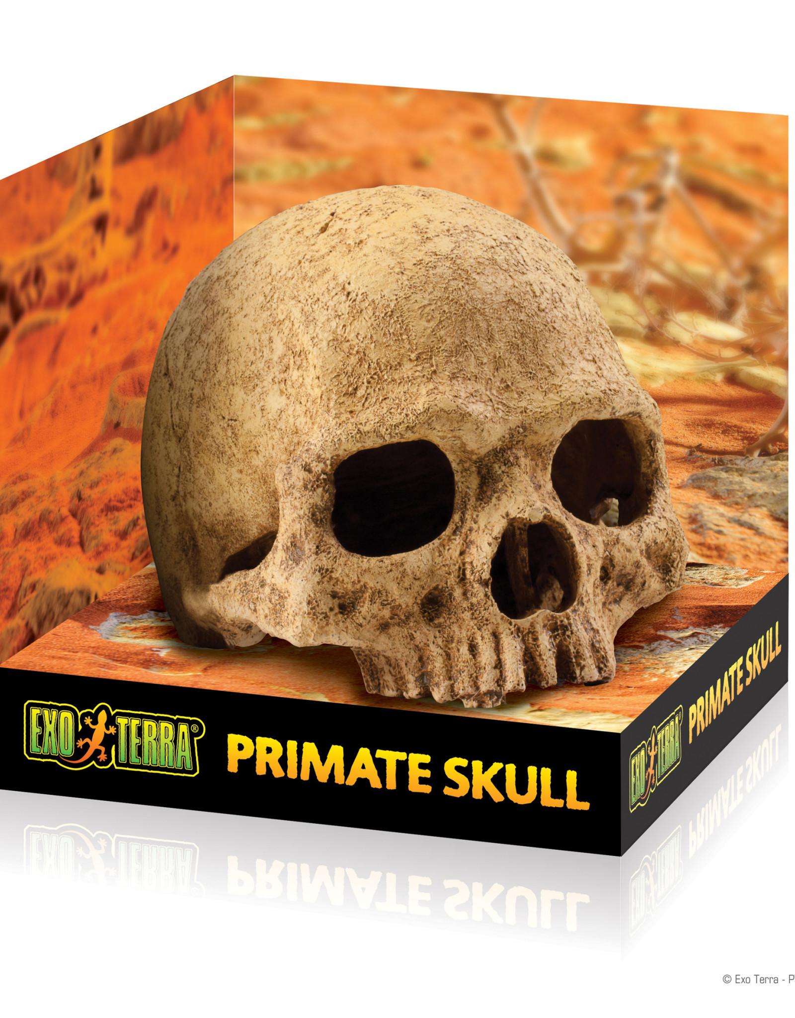 EXO-TERRA Exo Terra Primate Skull