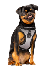 Canada Pooch Canada Pooch Everything Harness Mesh Reflective