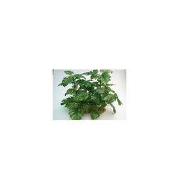 SILK PLANT MONSTERA XXLARGE w/ROCK RESIN BASE EACH