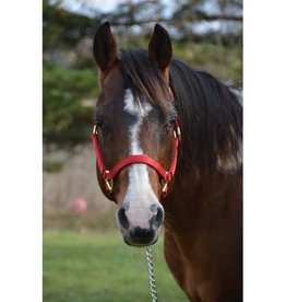 Western Rawhide Western Rawhide  Signature Halter Collection