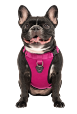 Canada Pooch Canada Pooch Everything Harness Mesh Pink S